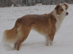johnsonsenglishshepherds.weebly.com